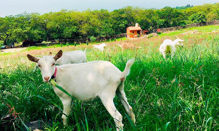 tours-en-chapala-granja-de-cabras-galo-de-allende-img-cel-5